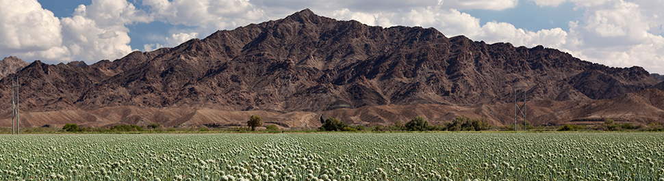 Picture of a crop field up against a mountain in Yuma, AZ